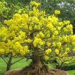 Mùa Xuân thay áo trên cây