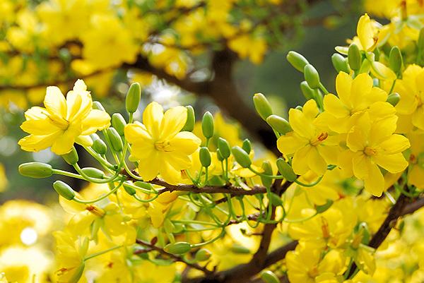 Phù thủy và mùa Xuân