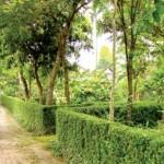 Những ngôi nhà vườn cổ xứ Huế