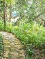 Lối đi nhỏ trong vườn xưa