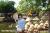 Gắn du lịch với nghề làm nón lá