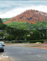 Chút thao thức với rừng thông Ngự Bình