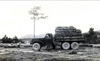 Chuyện trồng thông ở Ngự Bình hơn 40 năm trước
