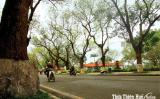 Thăm cây dã hương ngàn năm ở Tiên Lục: Thấy đất Huế thiệt độc đáo