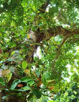Vườn Kim Long mùa đơm hoa kết trái