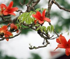 Có một mùa hoa…