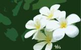Hương sứ vườn khuya
