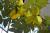 Cây trái vườn nhà