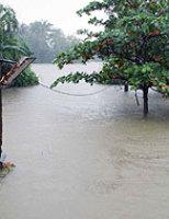 Tùy bút mùa lụt