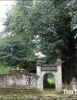 Giải mã bức bình phong miếu cây thị làng cổ Phước Tích