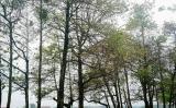 Ngây ngất công viên xứ Huế mùa thay lá
