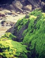 Đắm mình trong vẻ đẹp hoang sơ đầy cuốn hút của bãi biển Hàm Rồng