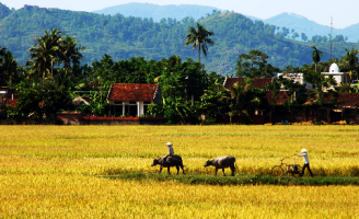 Thích về làng sống