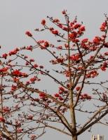 Thừa Thiên Huế xây dựng thành phố bốn mùa hoa