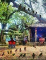 Bầy sẻ ở sân chùa
