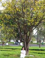 Hào hứng với công viên hoàng mai nở rộ