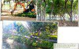 Cung đường đi bộ thơ mộng ven sông Hương